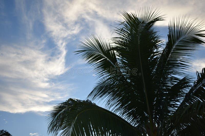 Handlag skyen fotografering för bildbyråer
