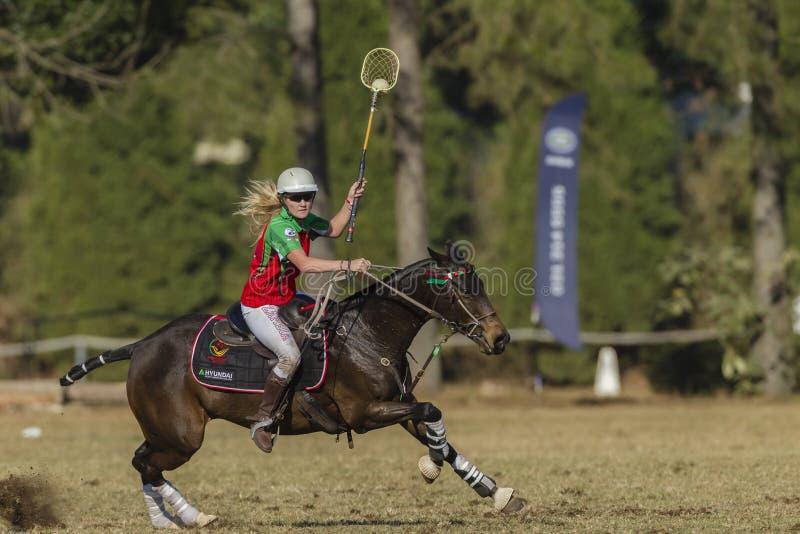 Handling för Polo-kors hästspelare fotografering för bildbyråer