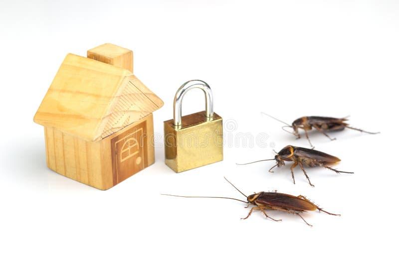 Handlingbild av kackerlackor, royaltyfri fotografi