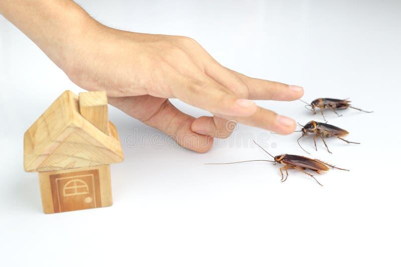 Handlingbild av kackerlackor, royaltyfri bild