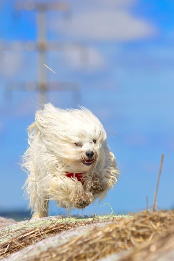 Handlinghund arkivbild