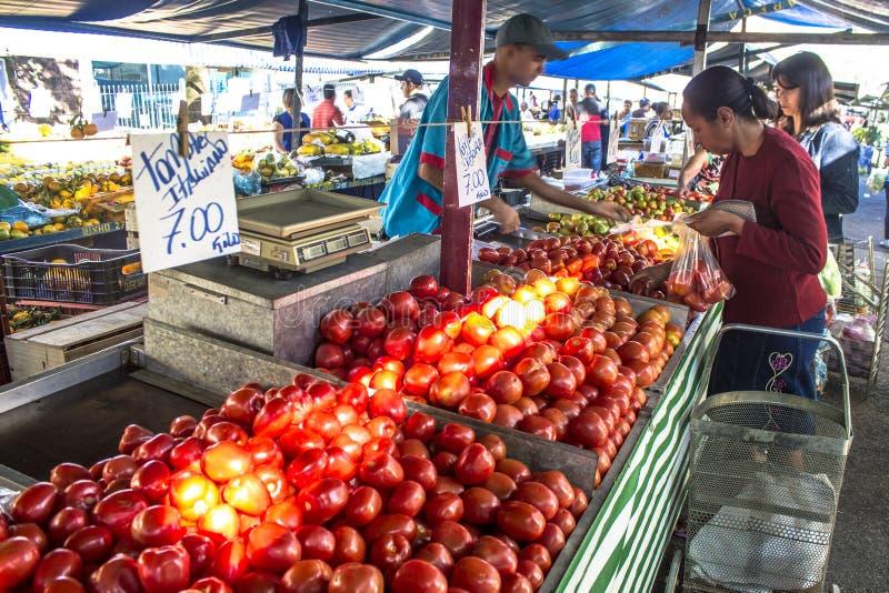 Handlowowie sprzedają świeżych pomidory obraz royalty free