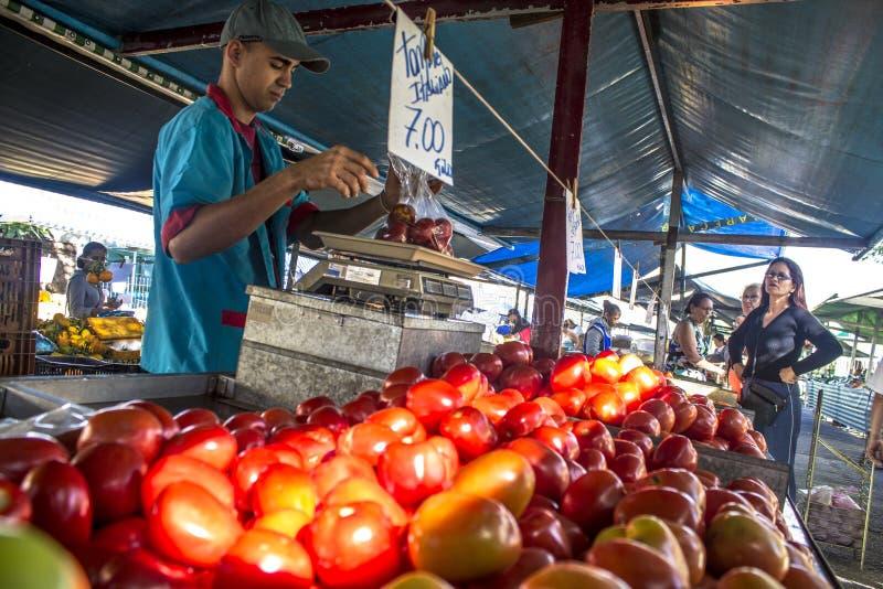 Handlowowie sprzedają świeżych pomidory zdjęcia royalty free