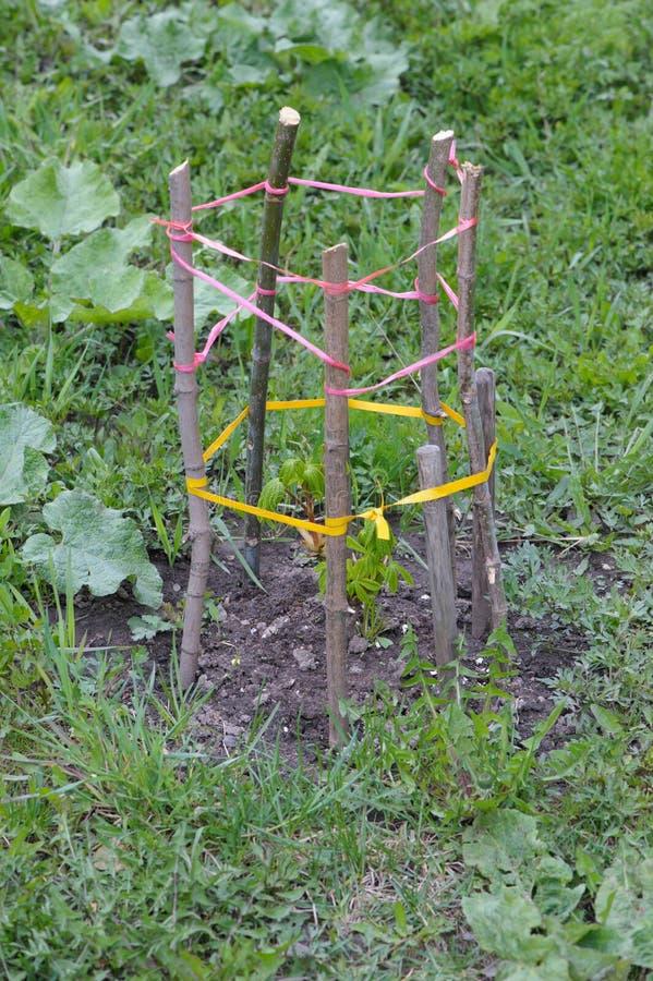 Handmade ограждать для дерева стоковое фото rf