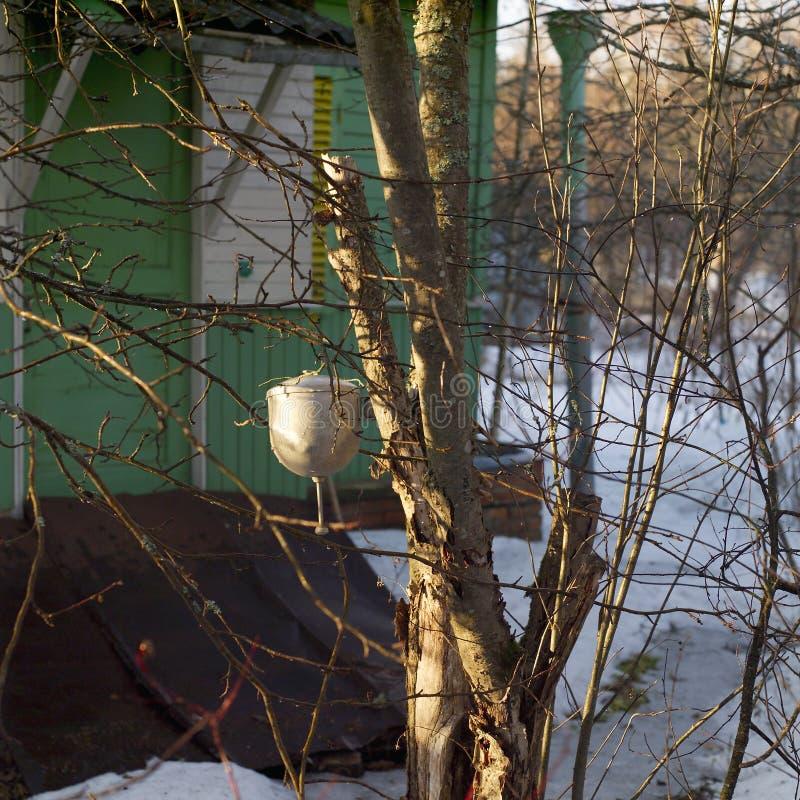 Handmade умывальник вися на дереве стоковое изображение rf