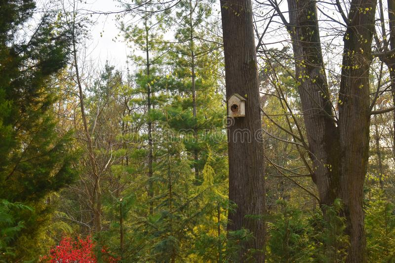 Handmade birdhouse on a tree in forest Park , hand wood shelter for birds to spend the winter royalty free stock image