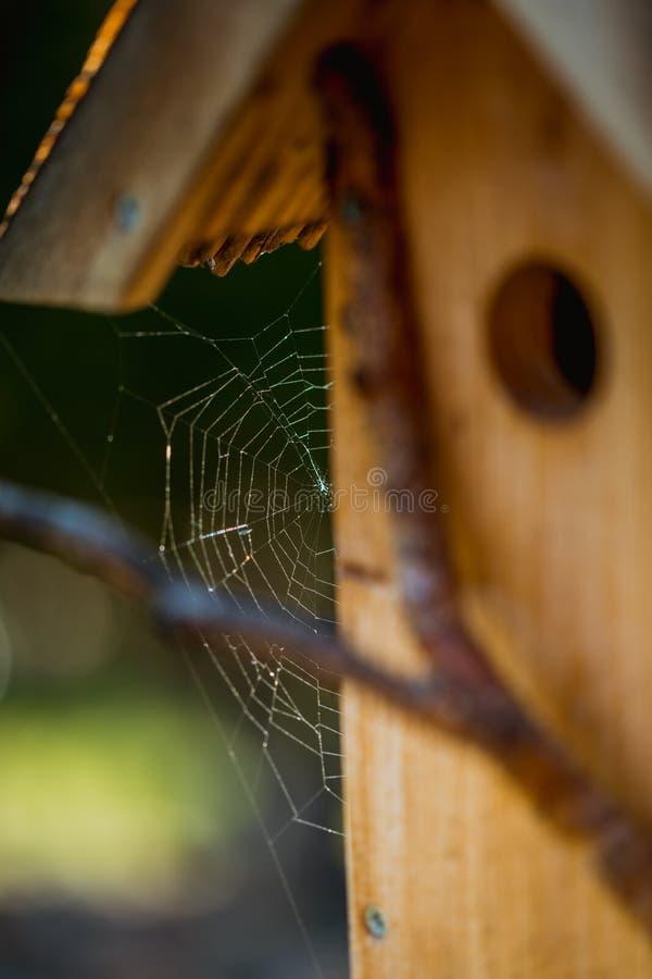 Handmade gniazdownika pudełko z pająk siecią po deszczu w ogródzie obrazy stock