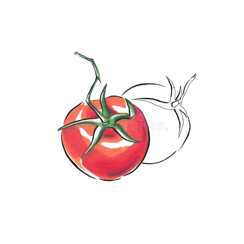 Handmade markier rysująca ilustracja pomidory ilustracja wektor