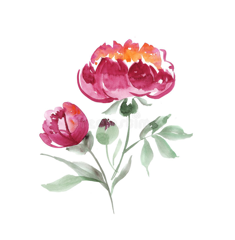 Handmade paint drawn elegant decorative flowers. Pink peony flower watercolor illustration stock illustration