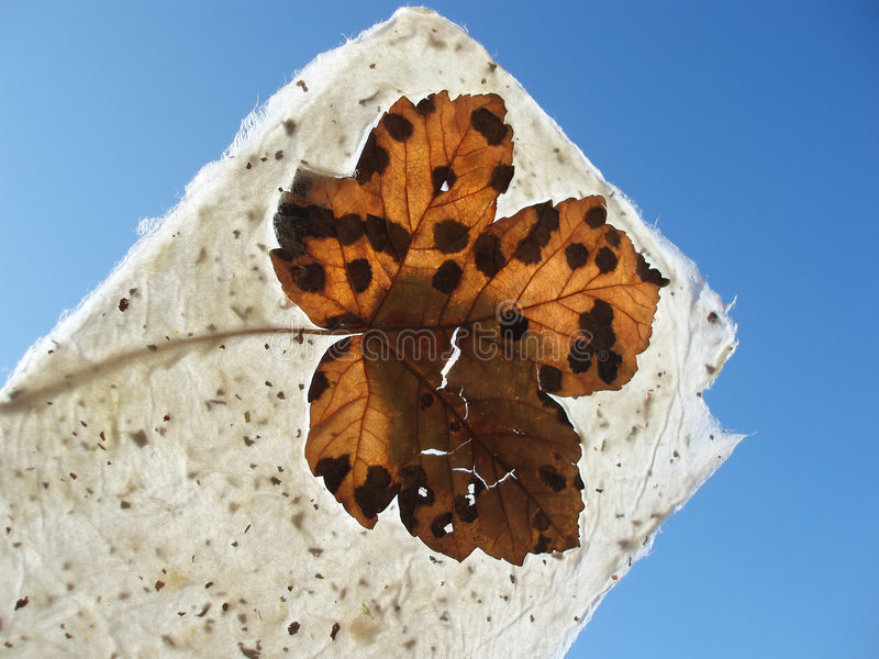 Download Handmade paper stock photo. Image of orange, maple, nerve - 219332