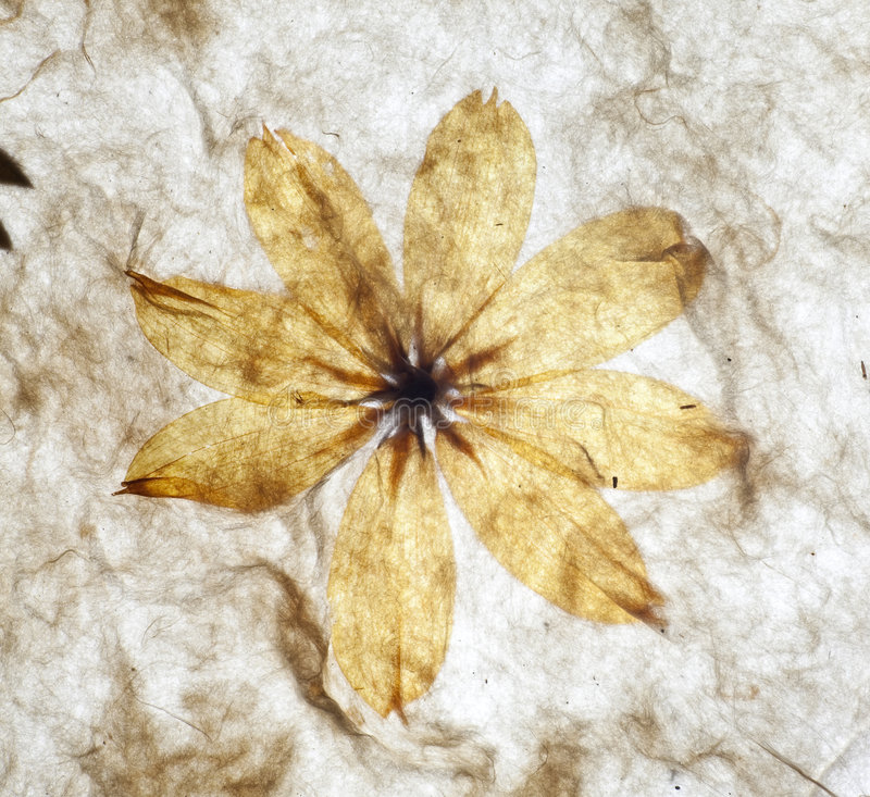 Handmade paper background royalty free stock photos