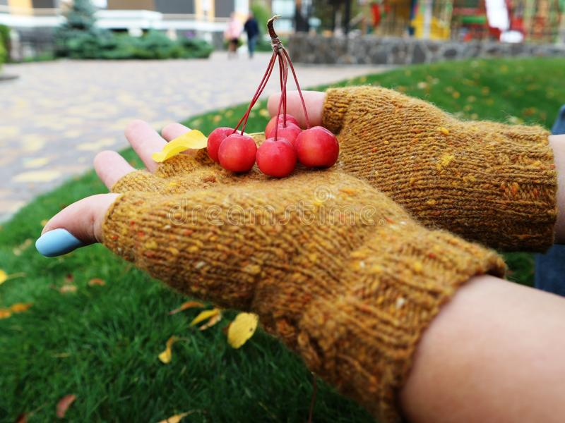 Handmade womens wool fingerless gloves. Autumn sketch royalty free stock photography