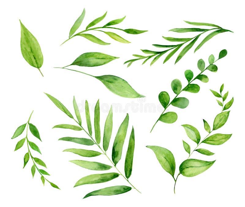Handpainted набор акварели с листьями и завтрак-обедами иллюстрация штока