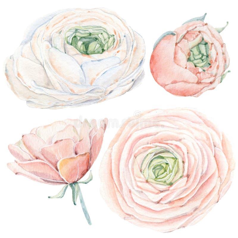 Handpainted цветки акварели установленные в винтажный стиль иллюстрация штока