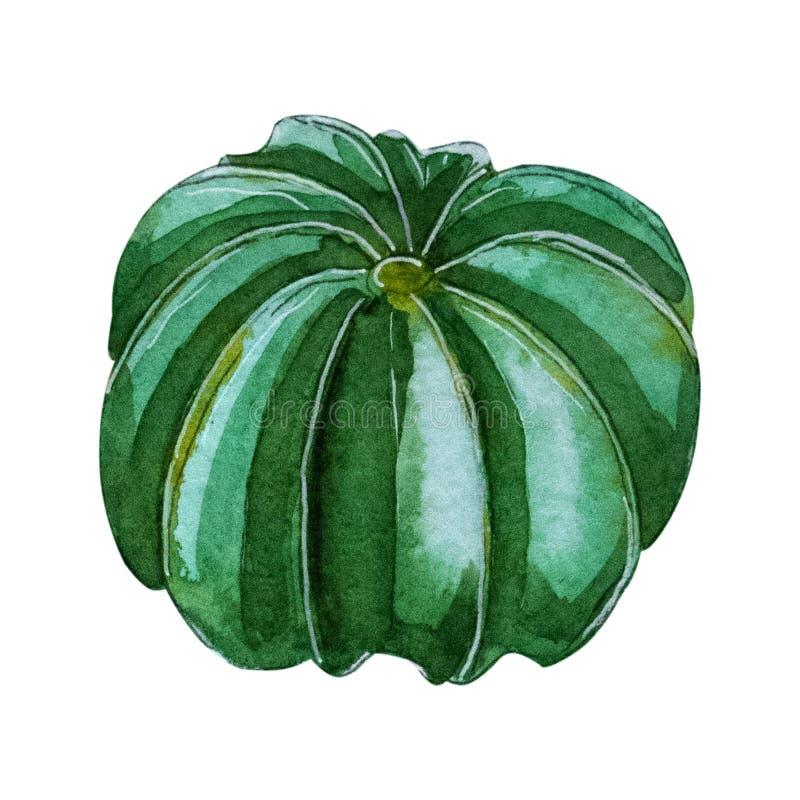 Handpainted kaktusväxt för vattenfärg som isoleras på vit bakgrund royaltyfri illustrationer