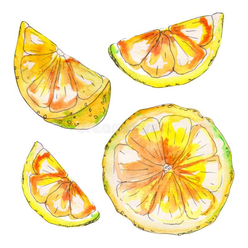Handpainted saftig citron för vattenfärg som isoleras på vit bakgrund stock illustrationer