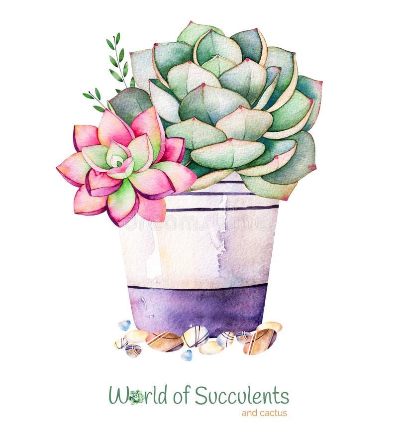 Handpainted suckulent växt för vattenfärg i kruka- och kiselstensten vektor illustrationer