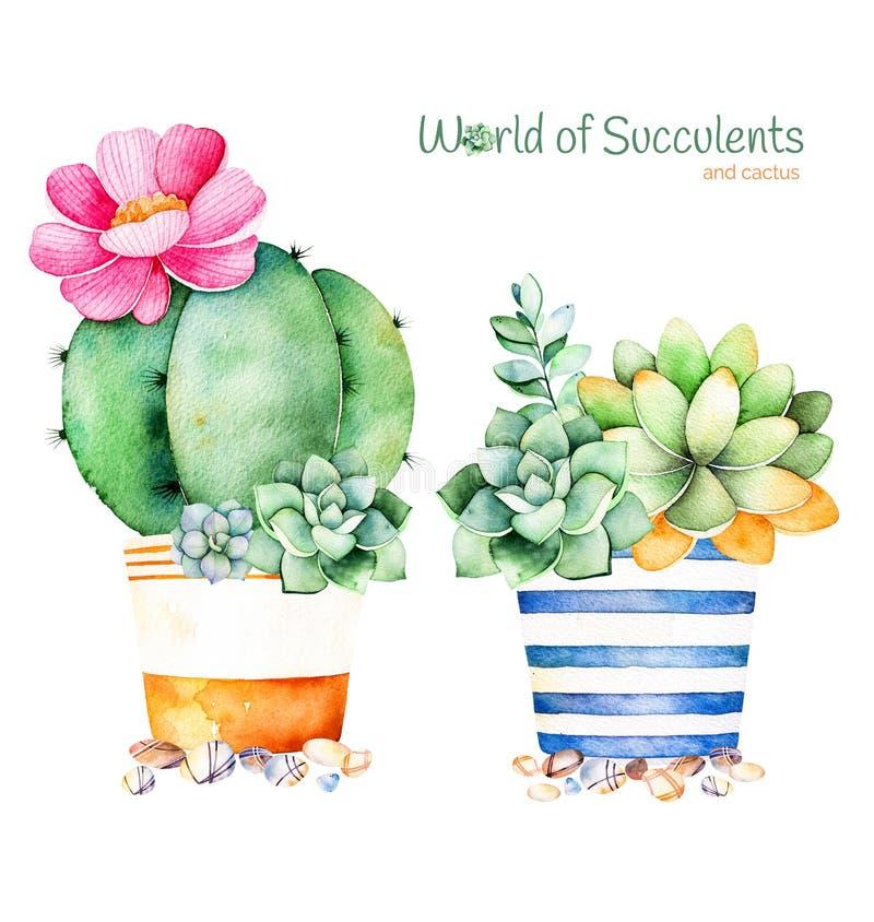 Handpainted suckulent växt för vattenfärg i kruka- och kiselstensten stock illustrationer