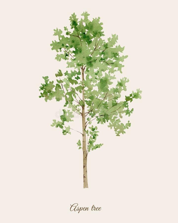 Handpainted vattenfärgaffisch med det asp- trädet vektor illustrationer