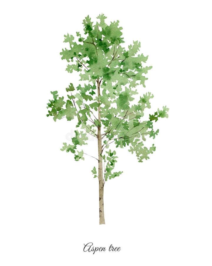 Handpainted vattenfärgaffisch med det asp- trädet royaltyfri illustrationer