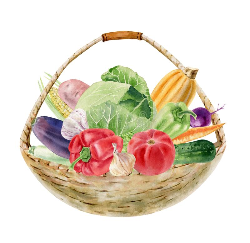 Handpainted watercolor clipart with fresh vegetables in basket stock images