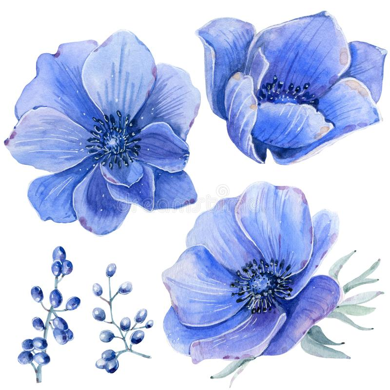 Handpainted watercolor flowers set in vintage style. vector illustration