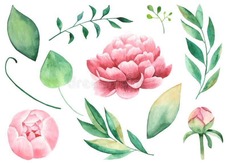 Handpainted watercolor pions, flowers, leaves, branches, foliage. royalty free illustration