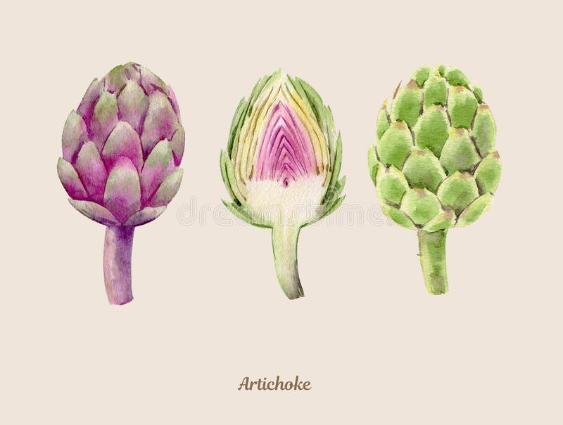 Handpainted watercolor poster with artichokes stock illustration