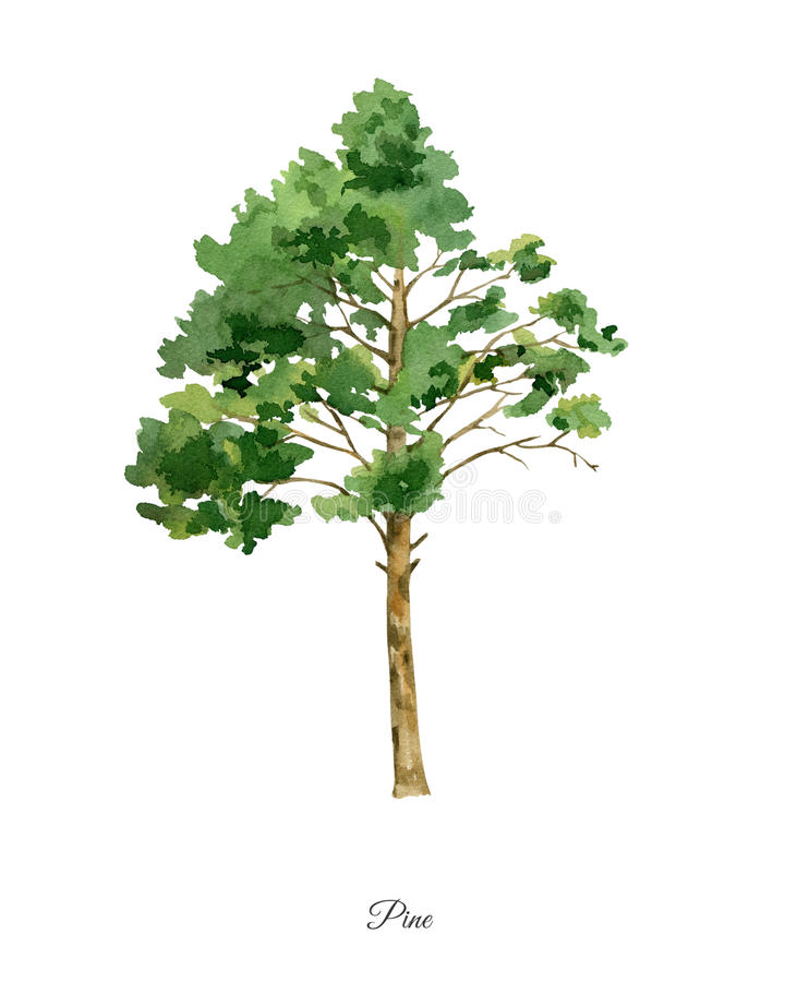 Handpainted watercolor poster with pine tree stock illustration