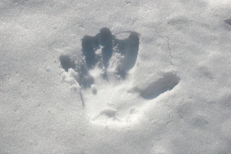 handprintsnow royaltyfria bilder