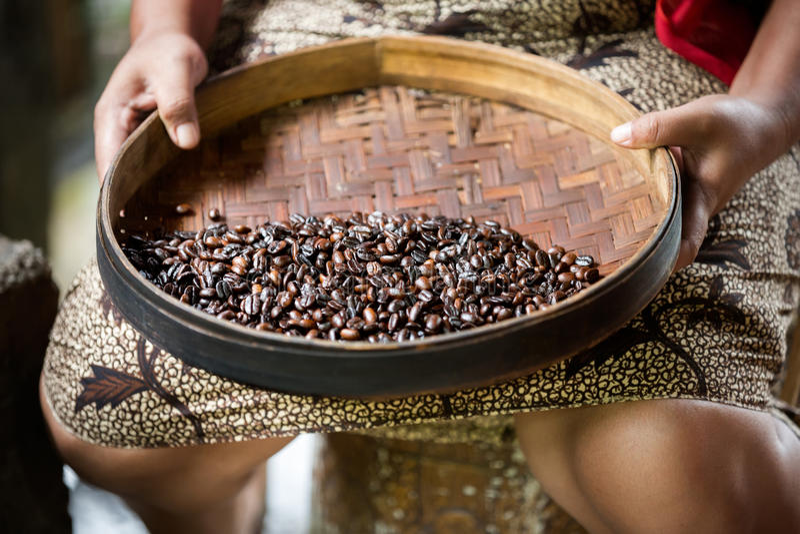 Handproductie van de koffie van Kopi luwak royalty-vrije stock afbeelding
