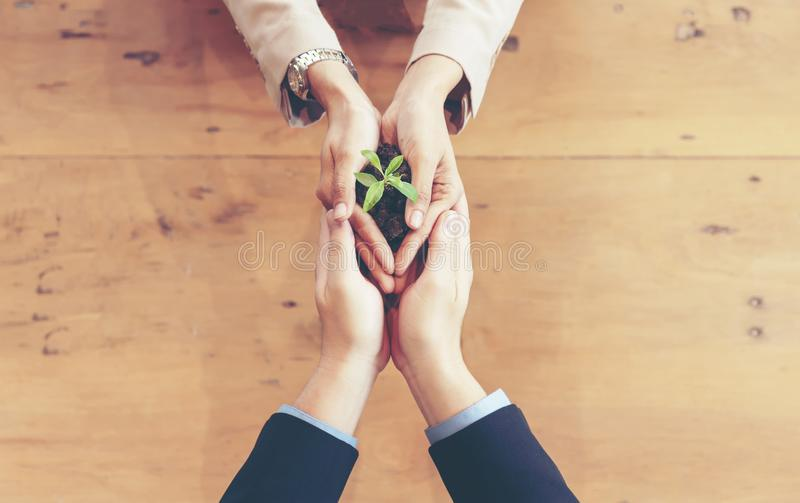 Hands adult business Team Work harmony Cupping young Plant and seeding Nurture grow Environmental and reduce global warming help e. Arth, top view. Ecology royalty free stock photos