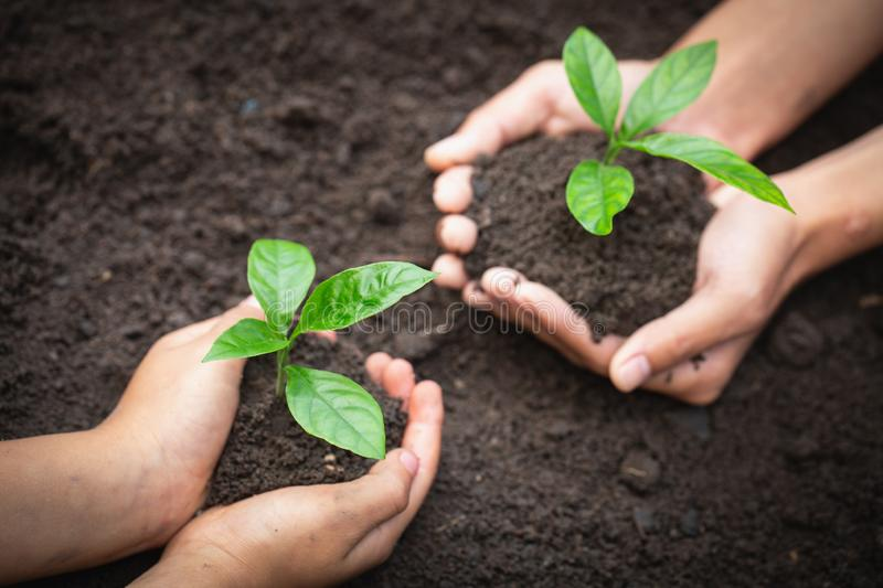 The hands of adults and children holding green seedlings, Environment Earth Day In the hands of trees growing seedlings, reduce royalty free stock photo