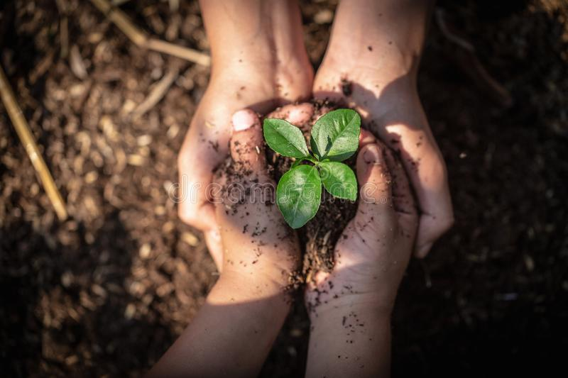 The hands of adults and children holding green seedlings, Environment Earth Day In the hands of trees growing seedlings, reduce. Global warming, concept of love royalty free stock images
