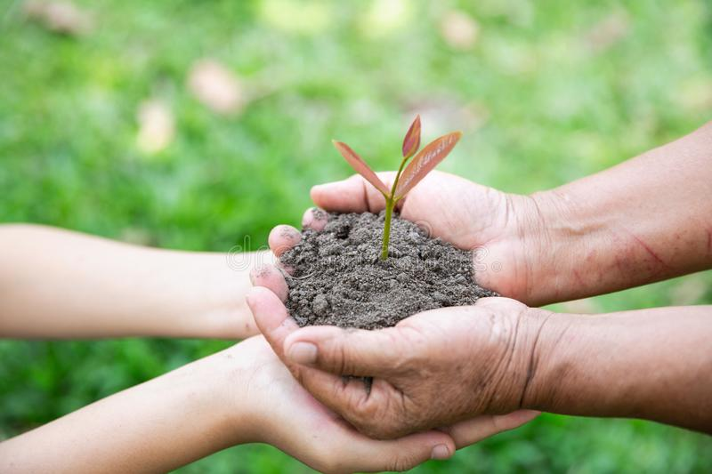 The hands of adults and children holding green seedlings, Environment Earth Day In the hands of trees growing seedlings, reduce. Global warming, concept of love royalty free stock photography