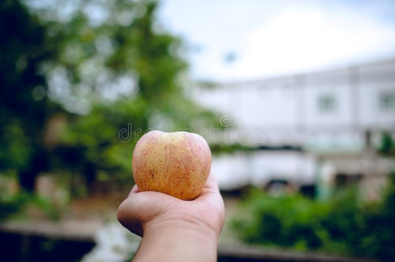 Hands and apples of people who love health care. Eating apples w royalty free stock photography