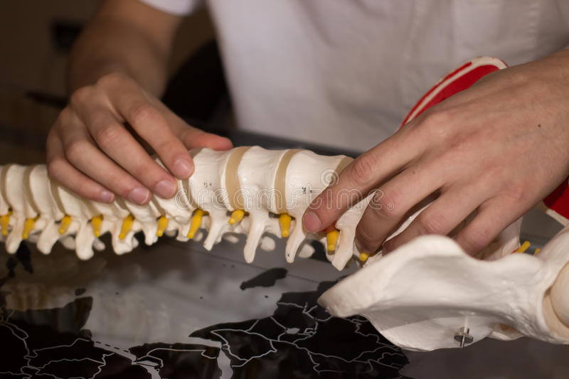 Hands on artificial spine stock photography