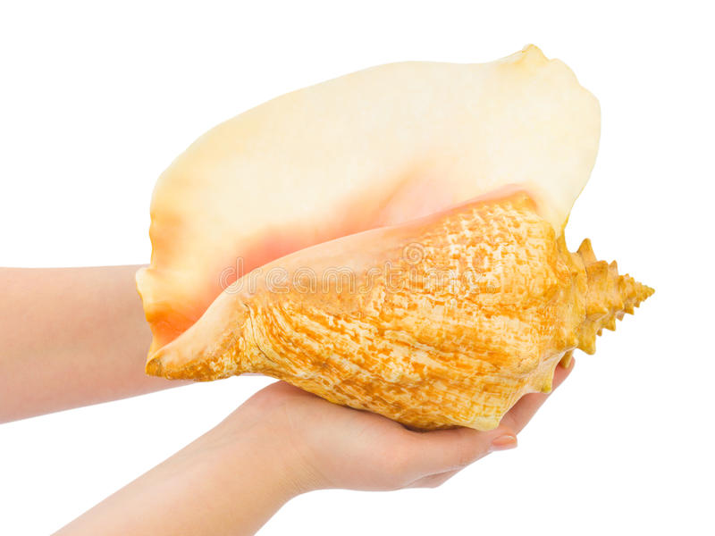 Hands And Big Conch Stock Photos