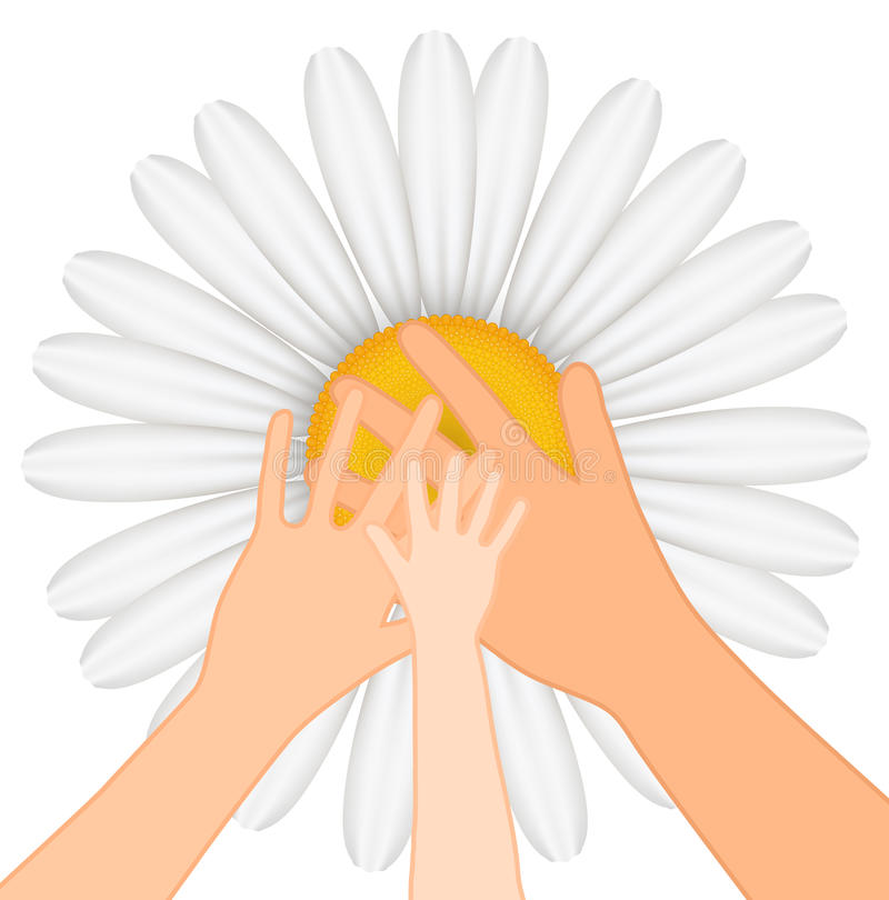 Hands on chamomile background