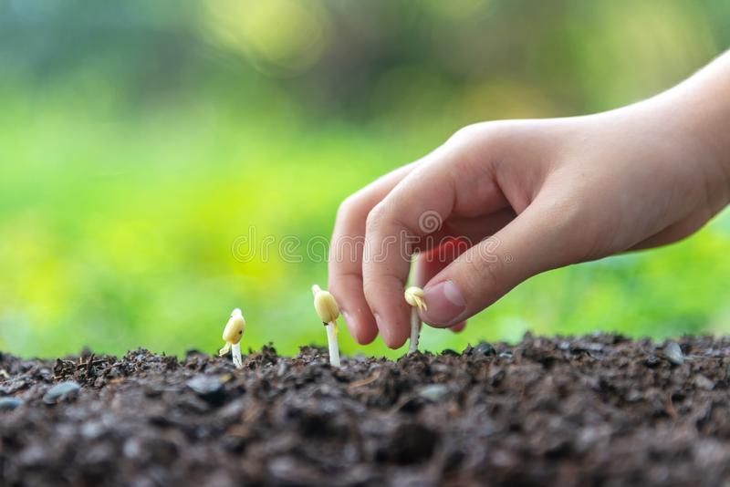 Hands child holding young plants on the back soil in the nature park of growth of plant for reduce global warming. stock photos