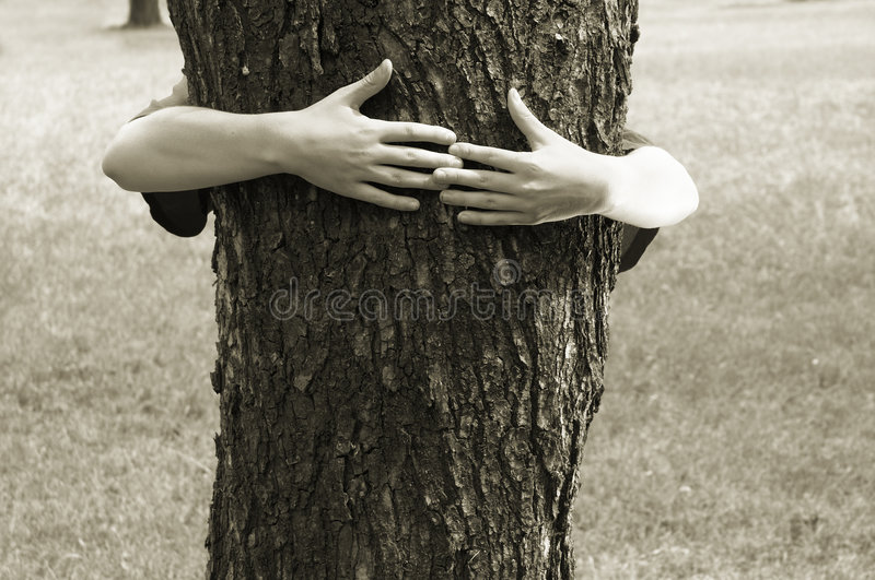 Download Hands clasping the tree stock photo. Image of retain, tree - 188172