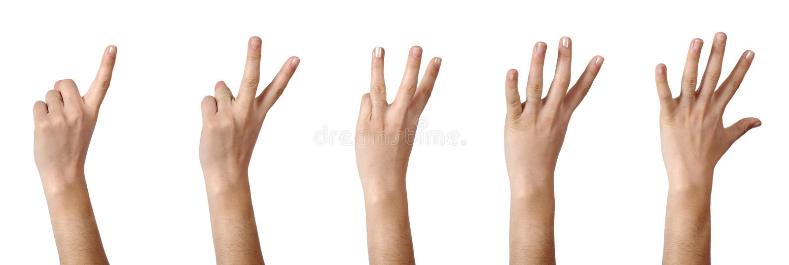 Hands, counting 1 to 5 royalty free stock photo