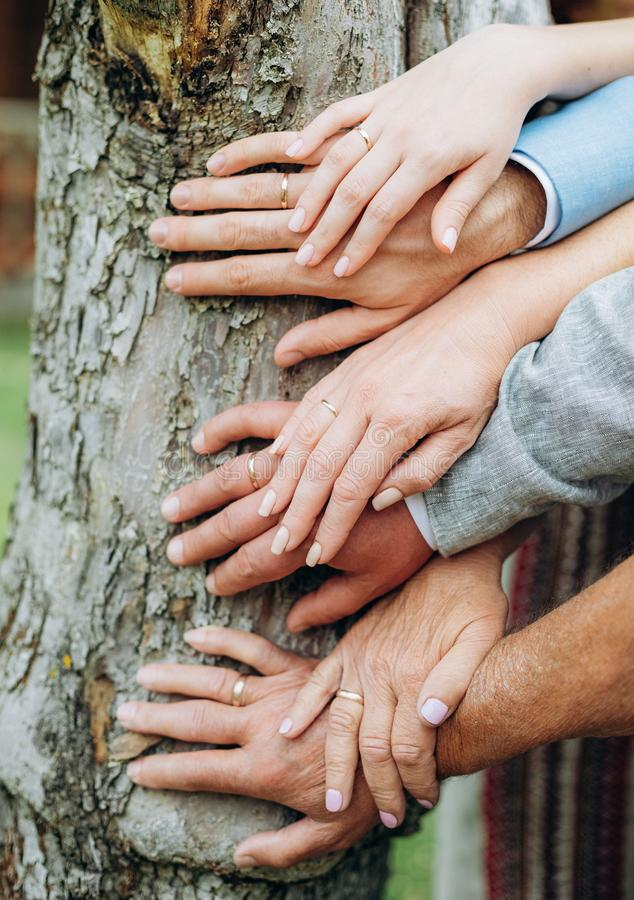 hands couples three generations family tree conceptual royalty free stock photography