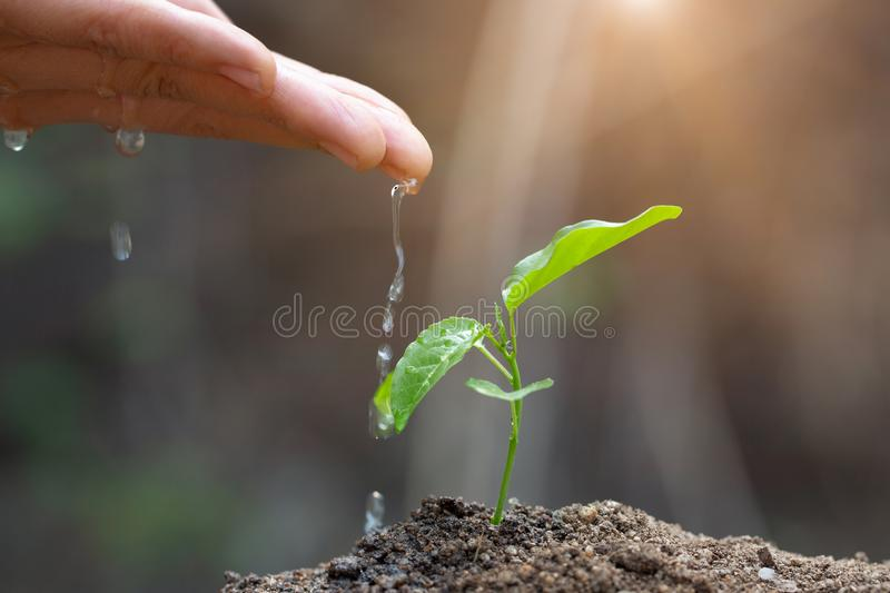 The hands are dripping water to the small seedlings, plant a tree, reduce global warming, World Environment Day royalty free stock photos