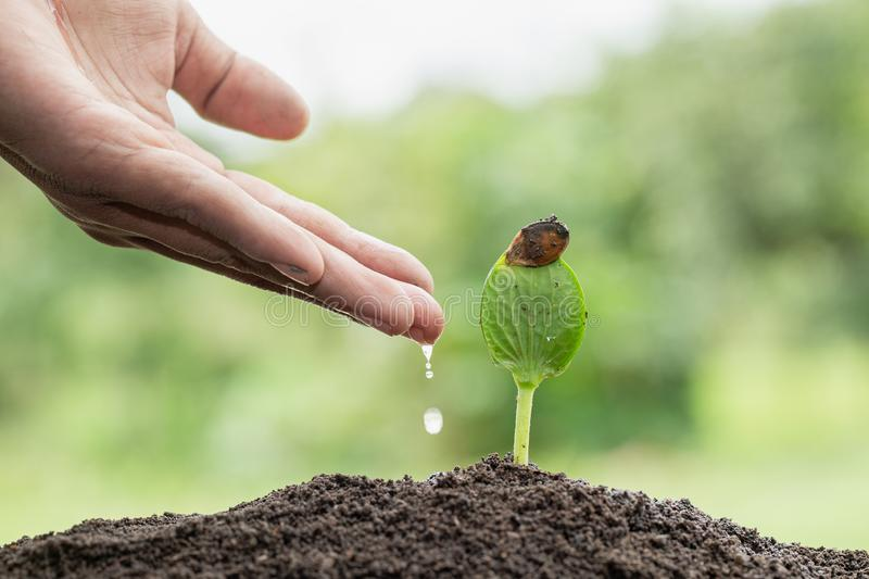 The hands are dripping water to the small seedlings, plant a tree, reduce global warming, World Environment Day stock images