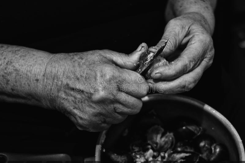 Hands of an elder woman holding a pot with chestnuts and peeling them, black and whte low key stock photos