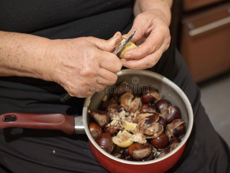 Hands of an elder woman holding a pot with chestnuts and peeling them royalty free stock photo