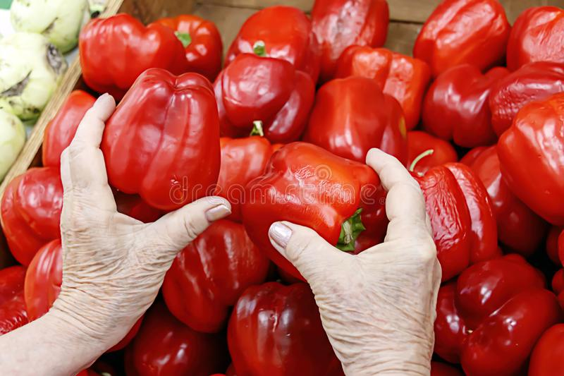 Hands of an elderly woman choosing a red pepper stock photography