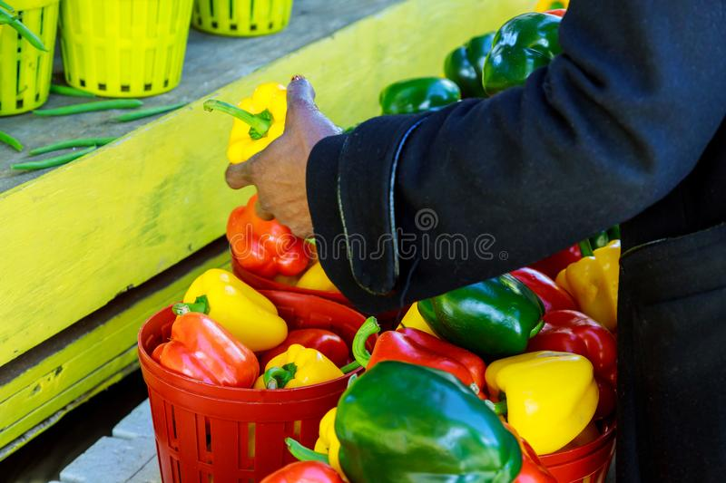 Hands of an elderly woman choosing a red sweet pepper stock image