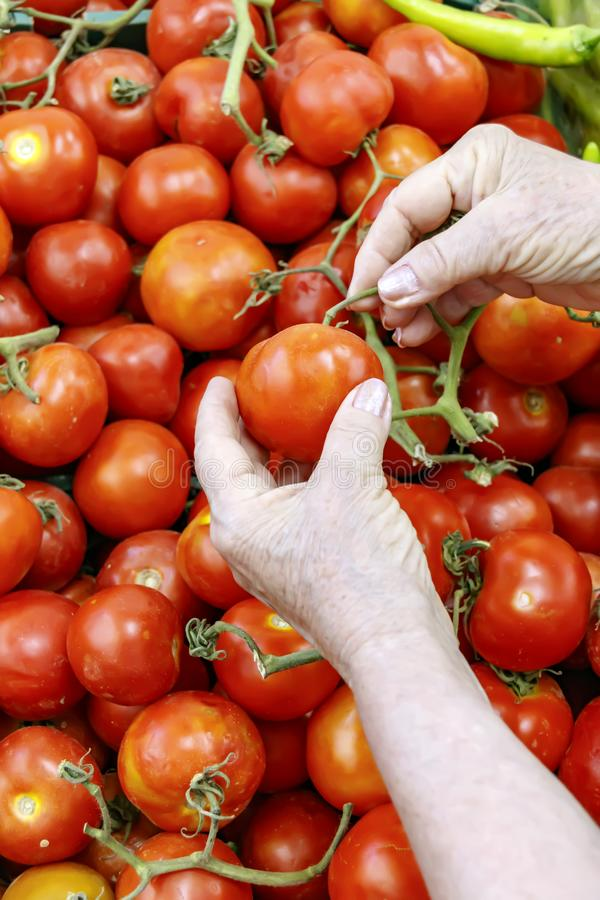 Hands of an elderly woman choosing tomatoes stock photography